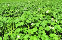 Новые агротехнологии против непогоды: аграрии юга России рассказали, что спасло их посевы во время весенних катаклизмов