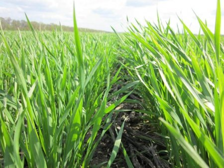 Адаптивная агробиотехнология