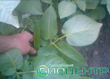 Полезна ли выращиваемая на Северном Кавказе еда для здоровья