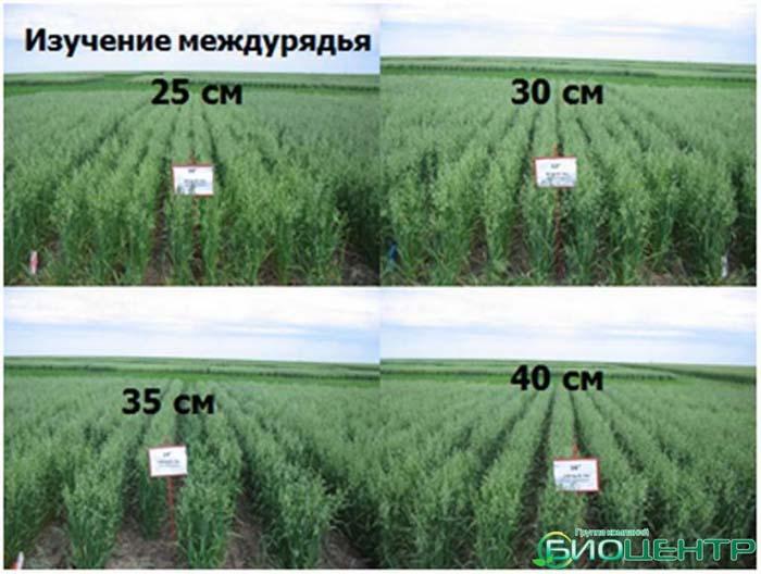 «Правильное земледелие», глава из будущей книги Николая Курдюмова